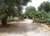 Villa Salento con piscina  - app. TULIPANO